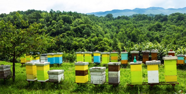 rural-business-beekeeping